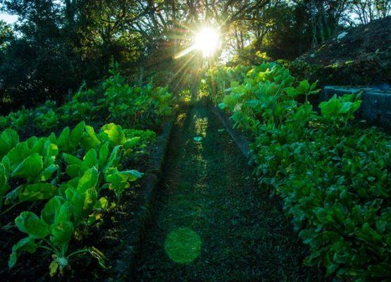 horta-organica (3)